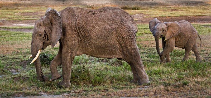 large_Elephants_8-10.jpg