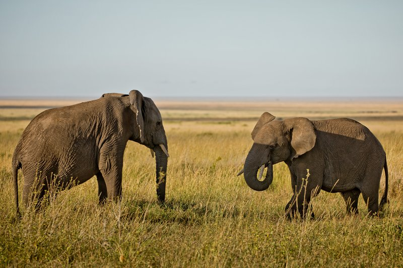 large_Elephants_804.jpg