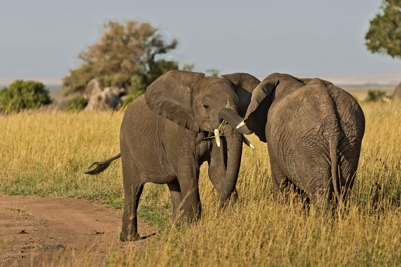 large_Elephants_811.jpg