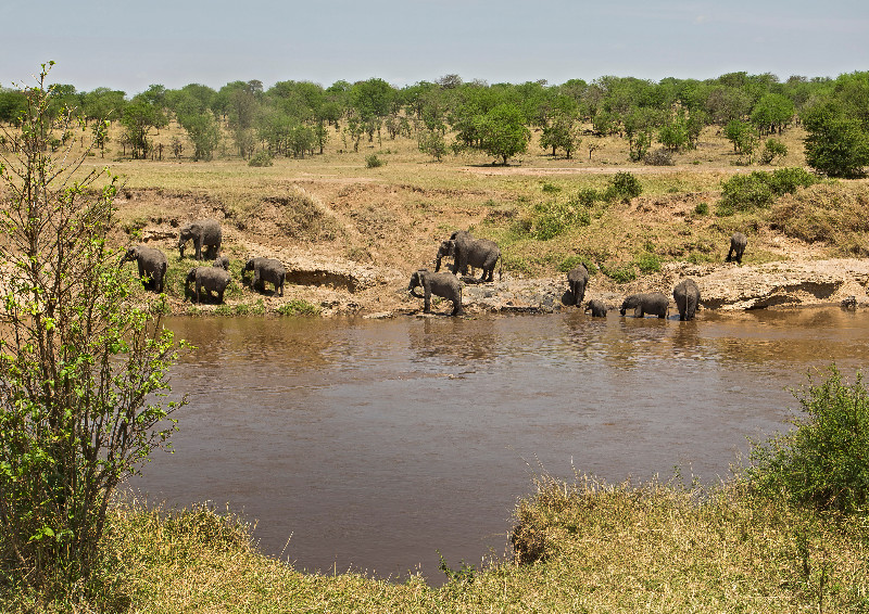 large_Elephants_in_the_River_1.jpg