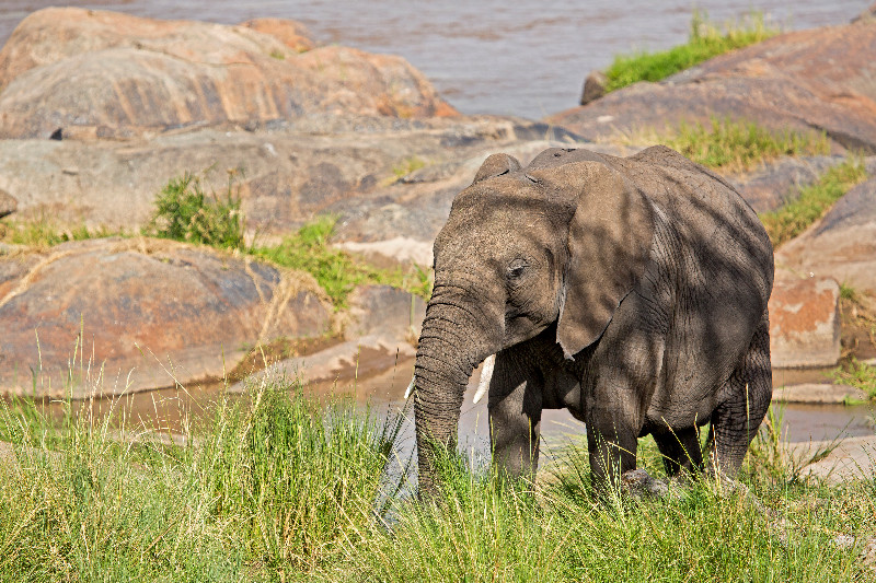 large_Elephants_in_the_River_72.jpg