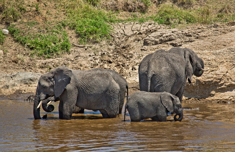 large_Elephants_in_the_Water_2.jpg