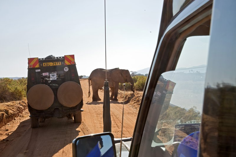 large_Elephants_in_the_road_1.jpg