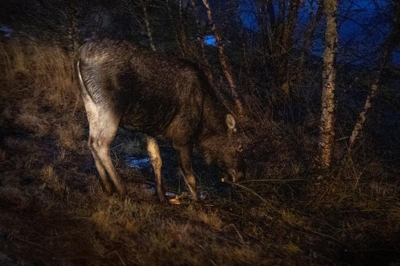 large_Elk.jpg