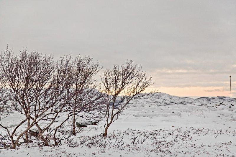 large_Finnmarksvidda_1.jpg