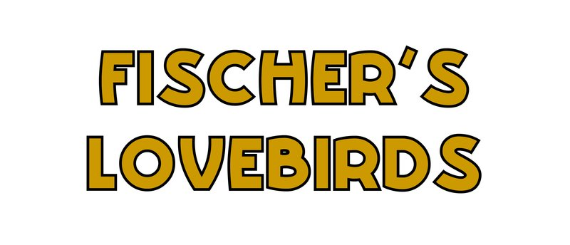 large_Fischer_s_Lovebirds.jpg