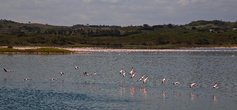 large_Flamingos_61.jpg