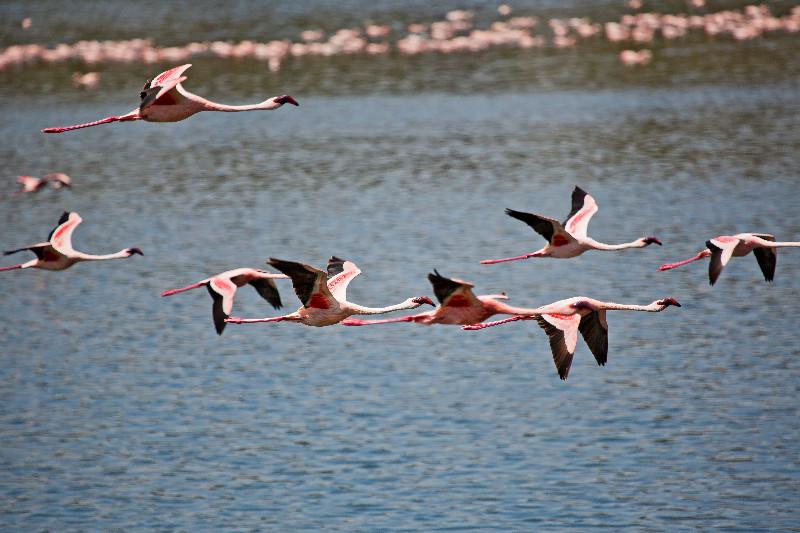 large_Flamingos_CF2.jpg