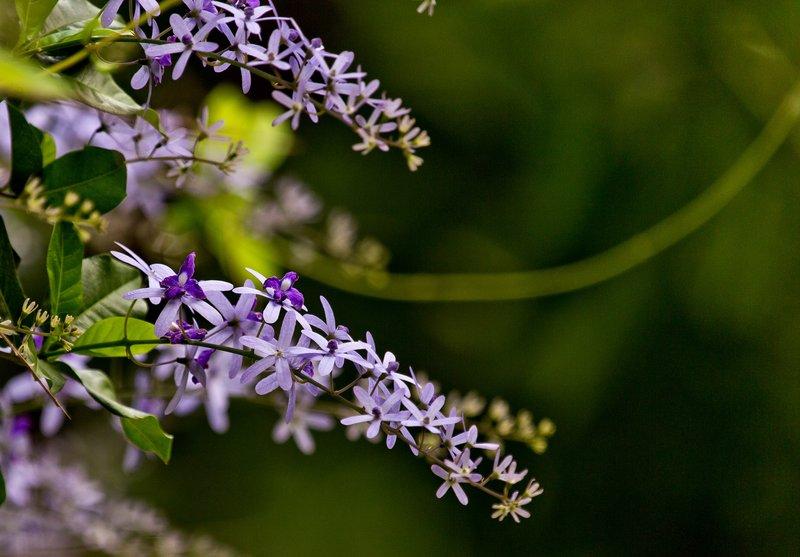 large_Flowers_51.jpg
