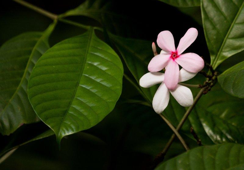 large_Flowers_52.jpg