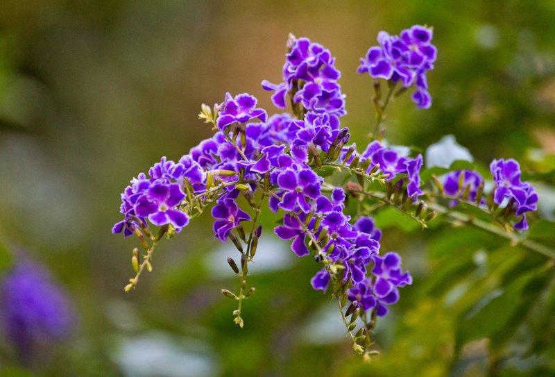 large_Flowers_71.jpg
