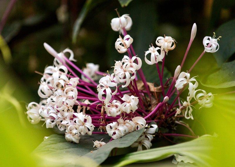 large_Flowers_76.jpg