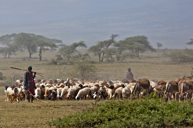 large_Goats_and_Donkeys_12-1.jpg