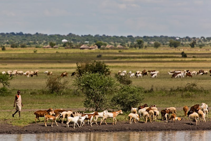 large_Goats_at_the_Waterhole_2.jpg