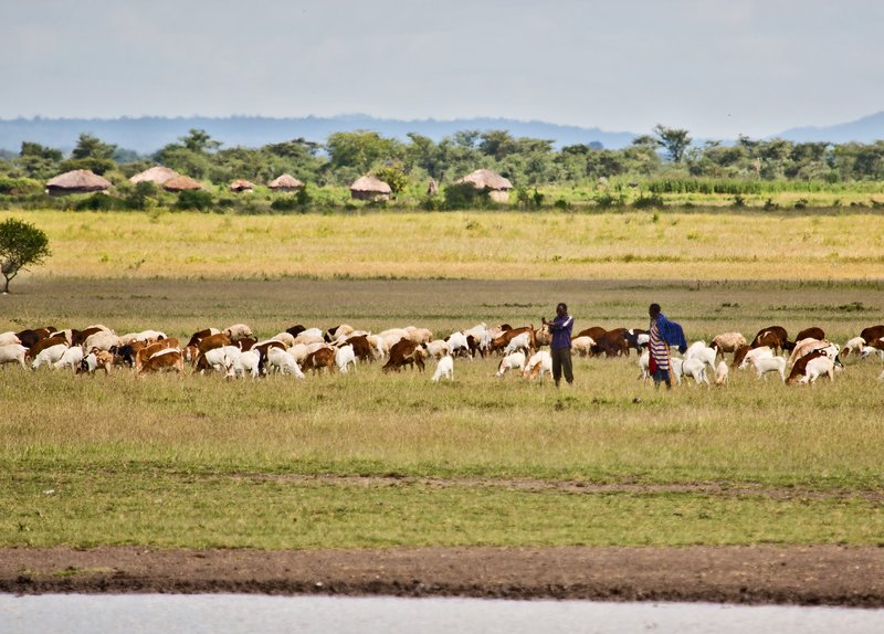 large_Goats_at_the_Waterhole_4.jpg