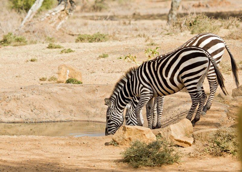 large_Gr_vy_s_Zebra_215.jpg