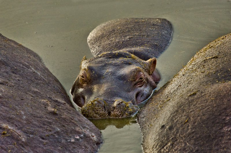 large_Hippo_at_R.._Pool_10-16.jpg