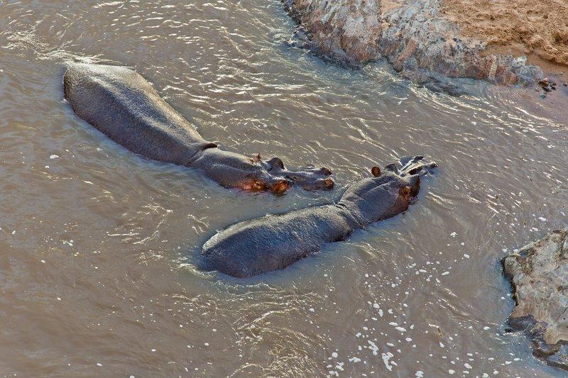 large_Hippos_10-212.jpg