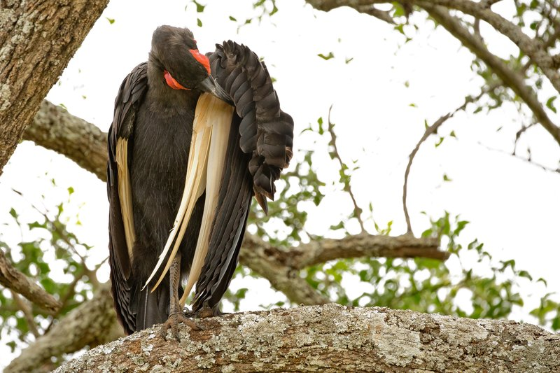 large_Hornbill__..rn_Ground_2.jpg