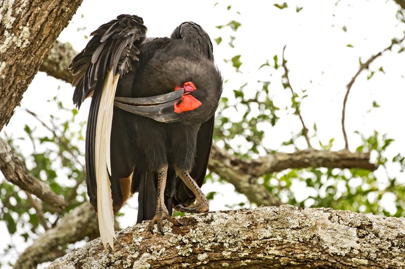large_Hornbill__..rn_Ground_4.jpg