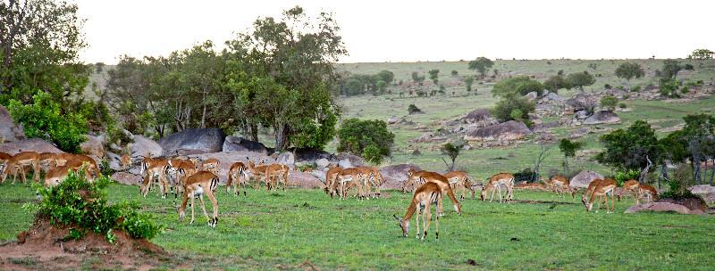 large_Impala_Family_1.jpg