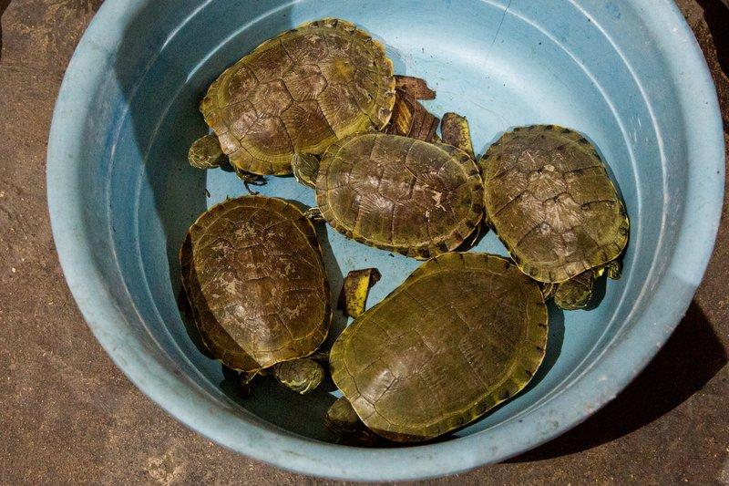 large_Iron_Market_-_Turtles_1.jpg