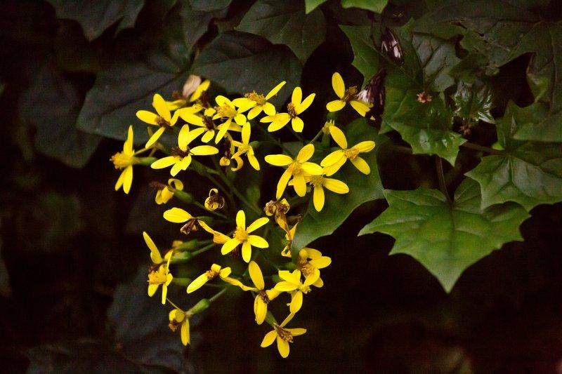 large_Karen_Blix..e_Gardens_5.jpg