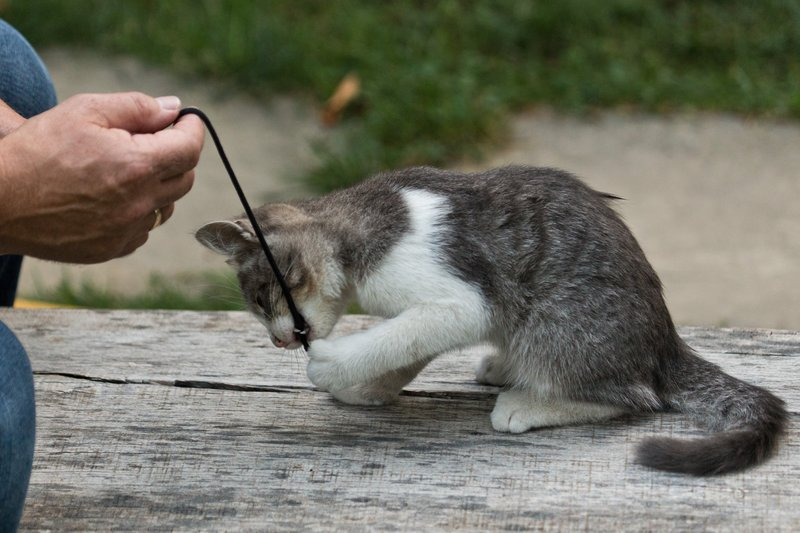 large_Kitten_1.jpg