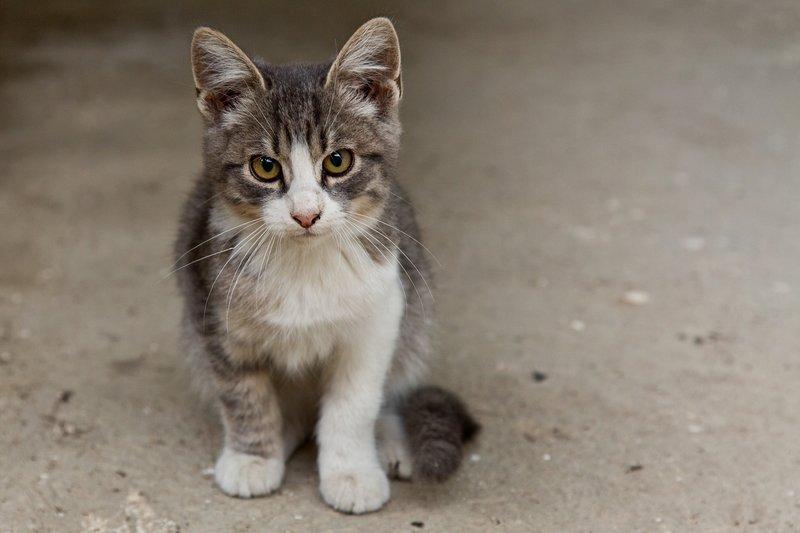 large_Kitten_11.jpg