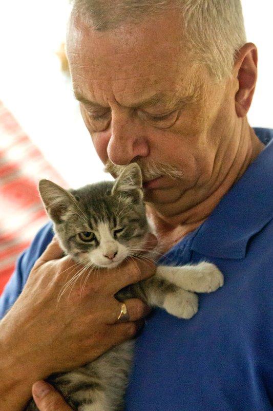 large_Kitten_12.jpg