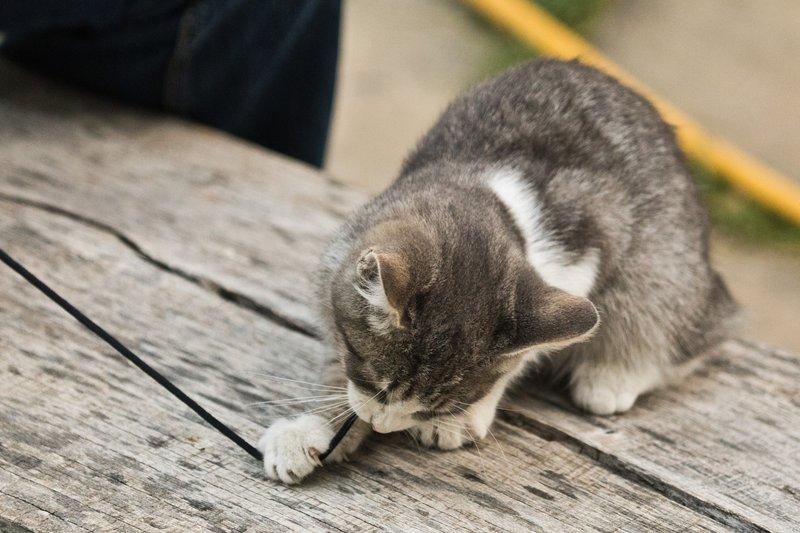 large_Kitten_5.jpg