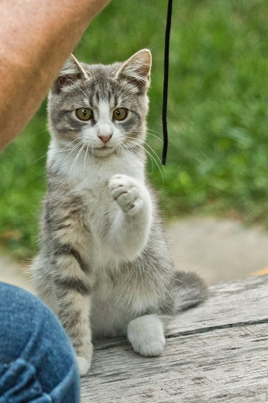 large_Kitten_6.jpg