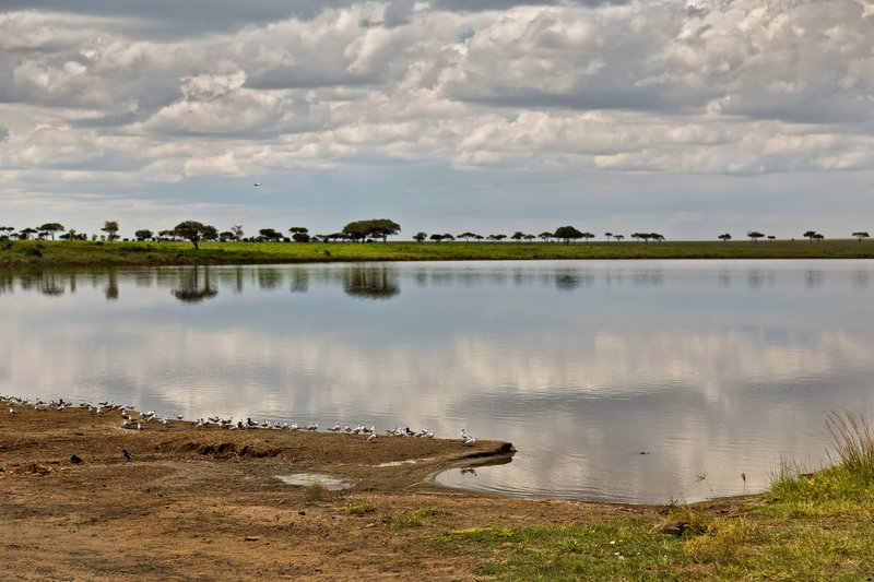 large_Lake_Magadi_11-3.jpg