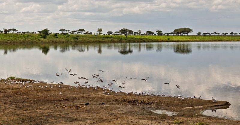 large_Lake_Magadi_11-4.jpg