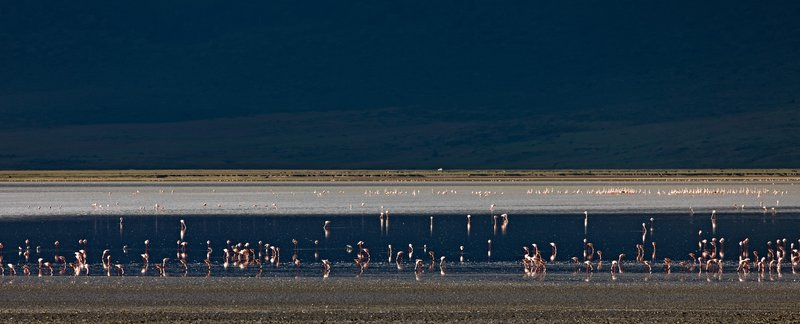 large_Lake_Magadi_Flamingos_1.jpg