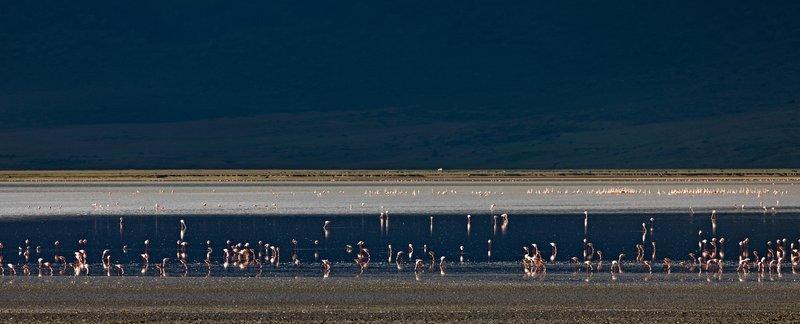 large_Lake_Magadi_Flamingos_1.jpg