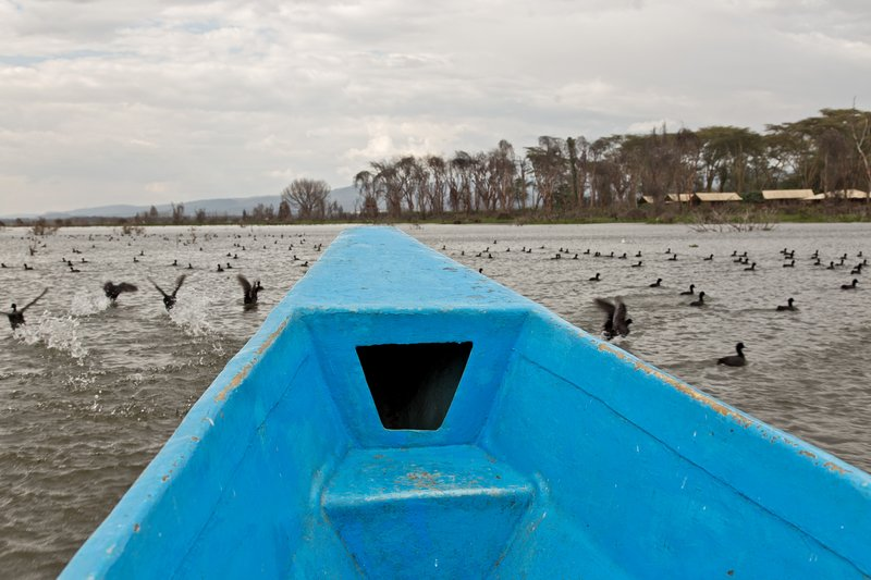large_Lake_Naivasha_3.jpg
