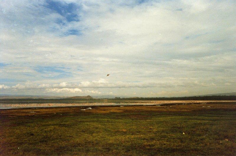 large_Lake_Nakur..s_______027.jpg