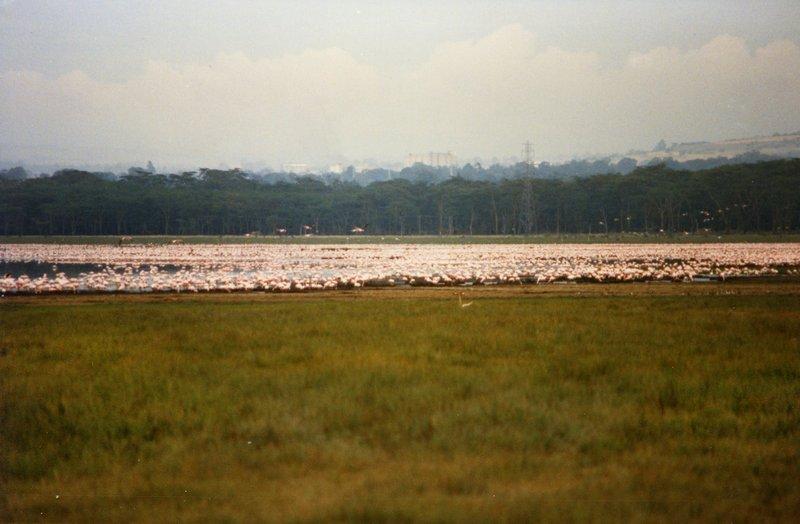 large_Lake_Nakur..s_______028.jpg