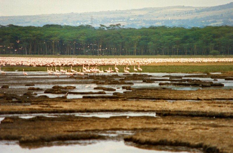 large_Lake_Nakur..s_______029.jpg