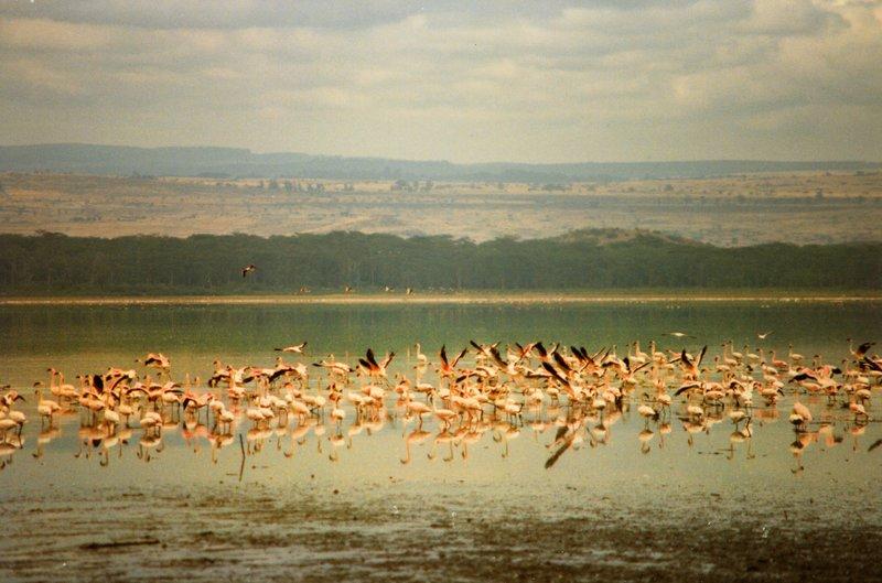 large_Lake_Nakur..s_______030.jpg