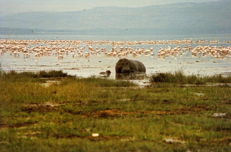 large_Lake_Nakur..s_______031.jpg