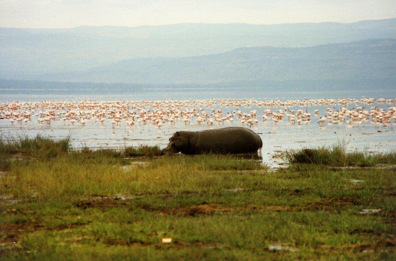 large_Lake_Nakur..s_______032.jpg