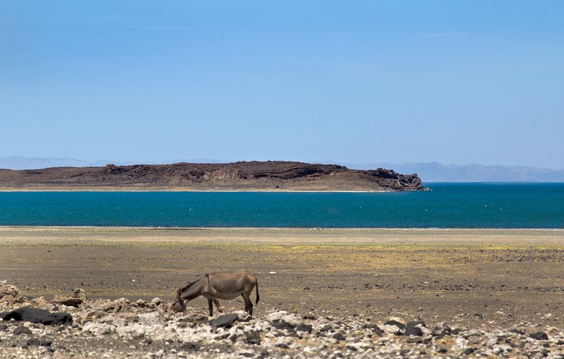large_Lake_Turkana_5.jpg