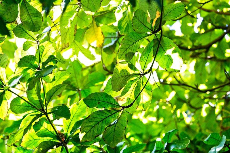 large_Leaves_1.jpg