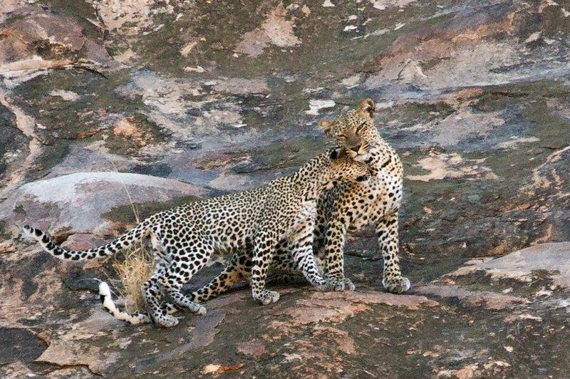 large_Leopard_13.jpg