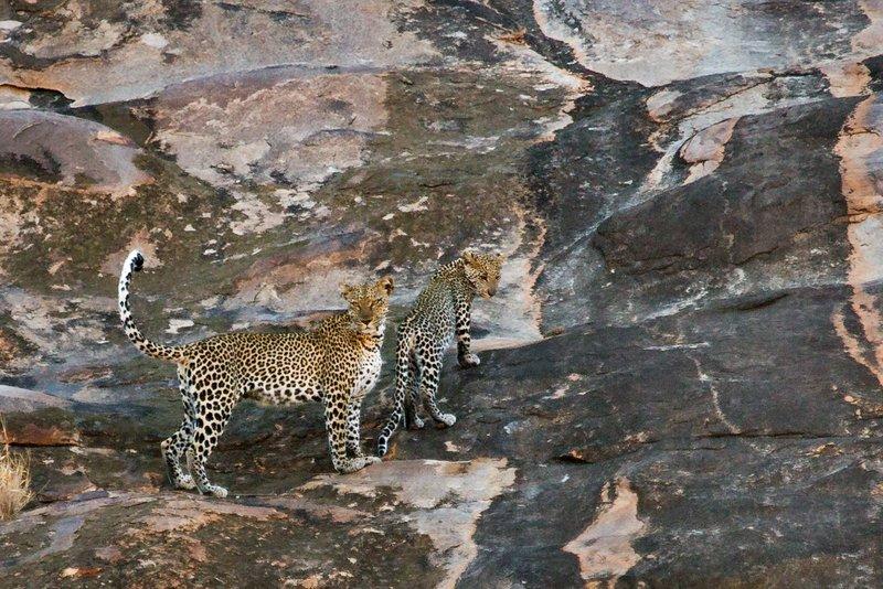 large_Leopard_15.jpg