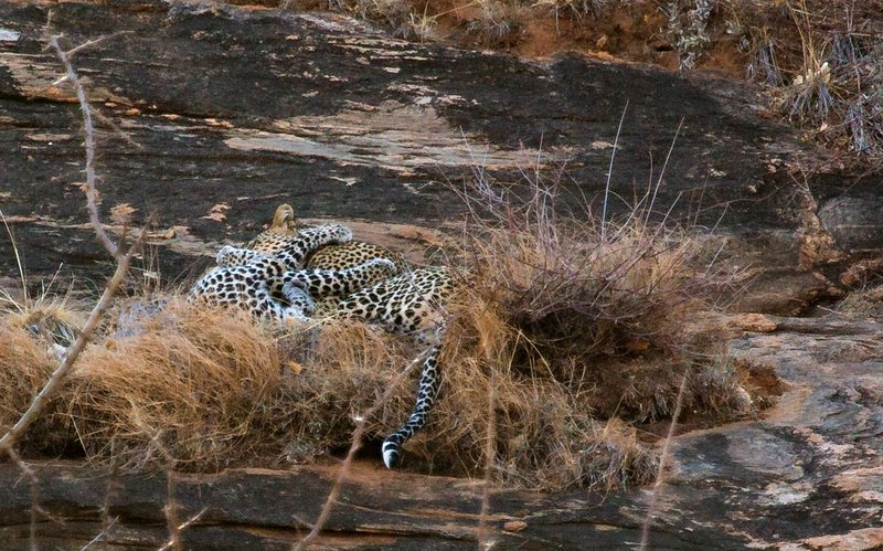 large_Leopard_8.jpg