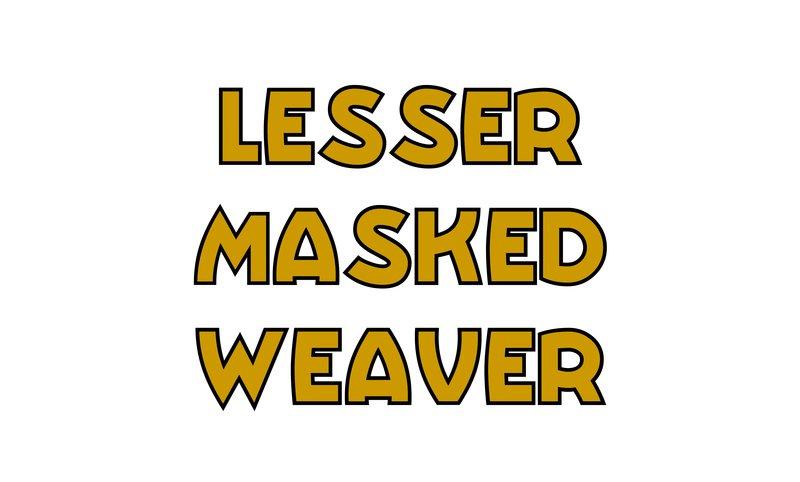 large_Lesser_Masked_Weaver.jpg