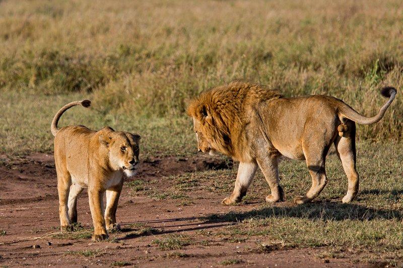 large_Lions_12-11.jpg